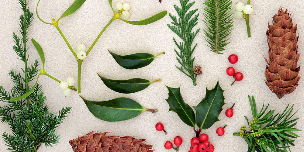Christmas Plants: Which Are Poisonous? Which Are Safe?