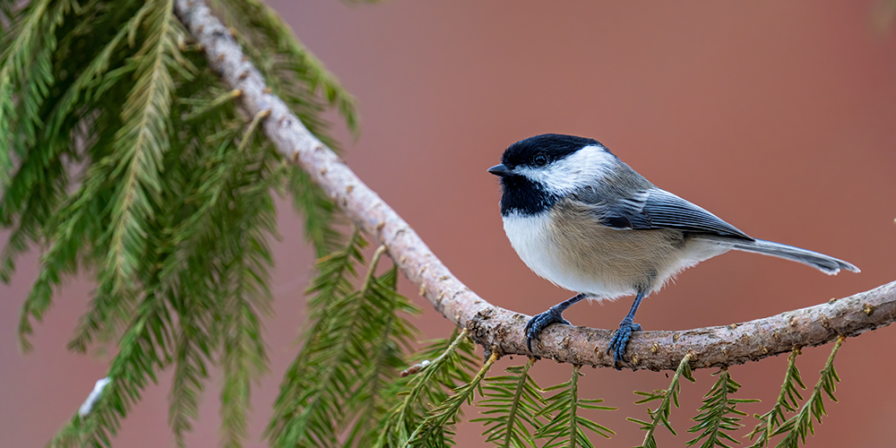 How to Attract Birds to Your Backyard - Wallace's Garden ...