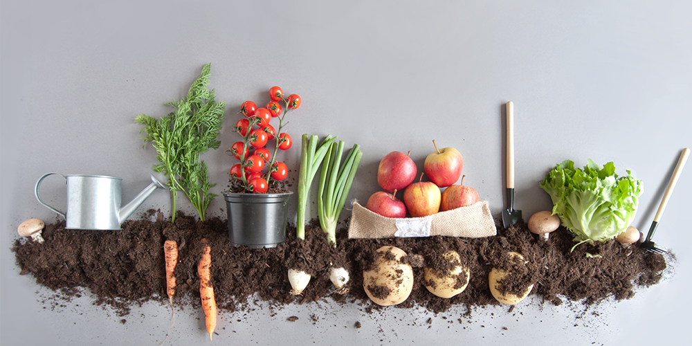 Tips for Growing Food Organically