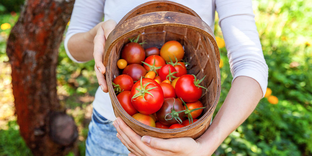 assorted tomatoes in basket