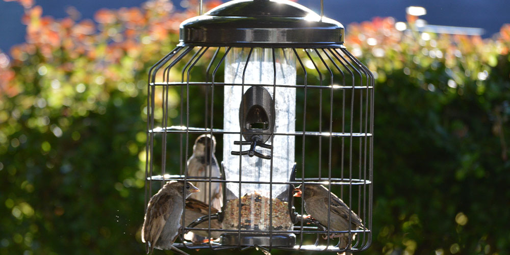 caged bird feeder to protect birds from predators