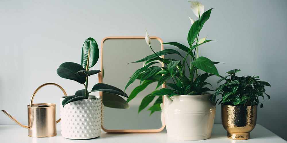 gold and white house decor with plants