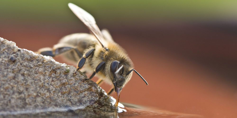 Help the Bees with Your Garden - Wallace's Greenhouse
