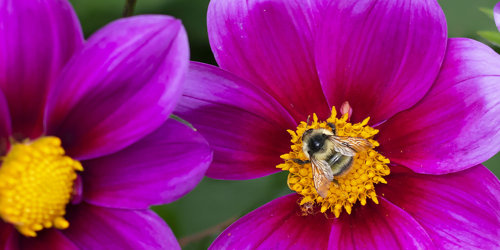 feed the bees with your garden in Iowa