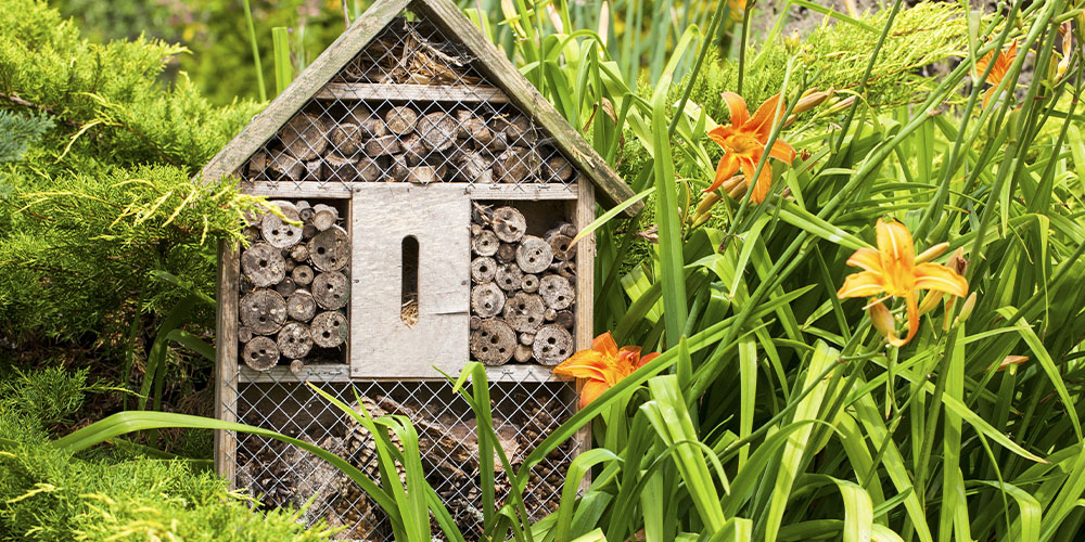 Build a Bee Hotel in Your Garden - Wallace's